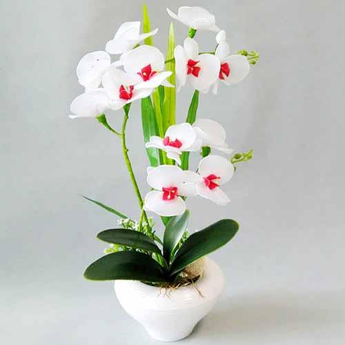 White phalaenopsis, nylon flowers