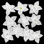Small fabric flowers, Organza, white, 4.5cm (approximate), 10 pieces