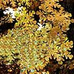 Sequins, Gold colour, Diameter 20mm, 75 pieces, 5g, Flower shape, Sequins are shiny