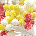 Fuzzy bulb flowers stamens