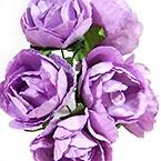 Camellia - Paper