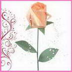 Rosebud gallery