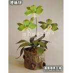 Paper flower making kit - Iris Variegated