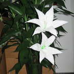 How to use lily flower stamens