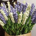 Origami lavender flowers