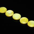 Beads, Freshwater shell, Yellow , Disc shape, 12mm x 12mm x 2mm, 32 Beads