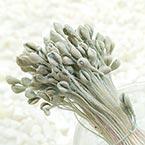 Matt cereal Stamens, grey, Matt (not shiny), 170 pieces (approximate)