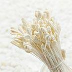 Matt cereal Stamens, Cream colour, Matt (not shiny), 190 pieces (approximate)