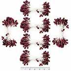 Sparkling stamen, Burgandy, 720 pieces (approximate), 5cm