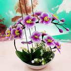Mesh Nylon flower making kit, white, Violet, 12 flowers, Phalaenopsis flowers