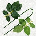 Rosettes Plastic Flower stem, Plastic, Dark green, 54cm
