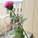 Nylon rose
